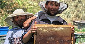 Трудится аки пчела: в каком состоянии пчеловодческая отрасль Кыргызстана?