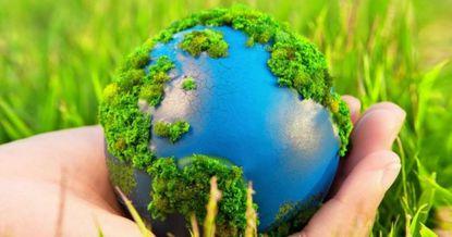 Заработать на экологию: как трастовый фонд поможет сохранить биоразнообразие в КР