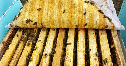 Сладкий бизнес: что мешает Кыргызстану поставлять мед на мировые рынки