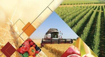 Реформирование сельского хозяйства в Узбекистане