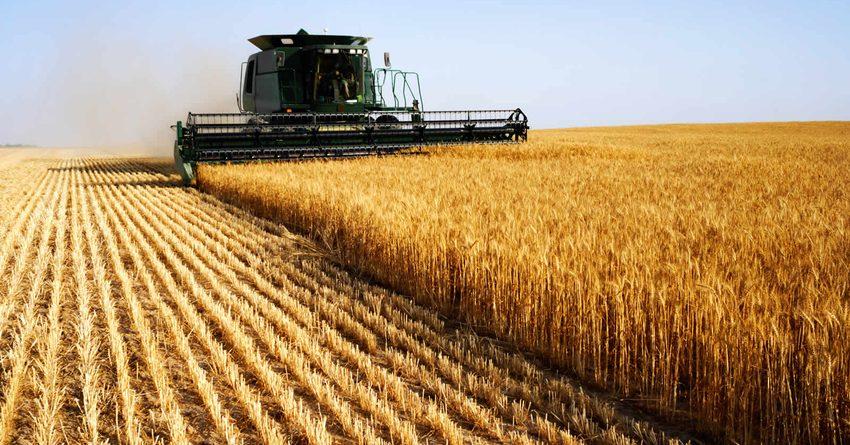 Кыргызстанда 146 миң гектар жерге буудай себилди