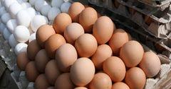 В Кыргызстане себестоимость куриных яиц выросла на 19.35%