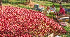 Всемирный банк: Экспорт фруктов из ЦА ускорит темпы роста экономики