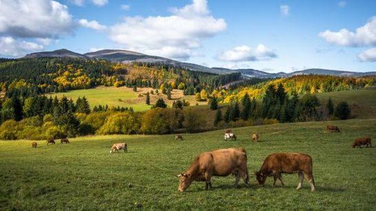 Самые низкие цены на молоко в ЕАЭС у кыргызстанских предприятий