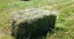 В Чуйской области цены на сено поднялись на 56%