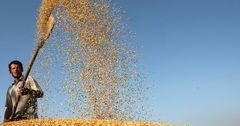 ФАО не ожидает удорожания сельхозпродукции в ближайшие 10 лет