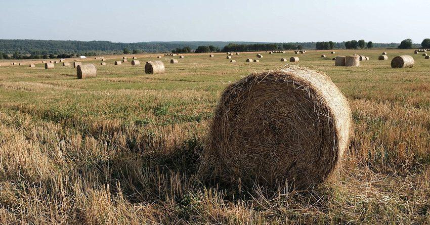 В Кыргызстане фермерам выдали 9.8 тысячи льготных кредитов