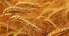 Стоимость сельхозпродукции в КР за год выросла на 13% — ЕЭК