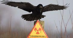 Президент одобрил получение€3,15 млн гранта от ЕС на ремедиацию урановых хвостохранилищ