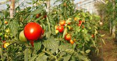 Узбекистан получит кредит от АБР в размере $154 млн на развитие плодоовощеводства