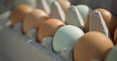 В Казахстане прогнозируют рост цен на куриные яйца