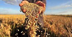 В КР продлены льготы по налогу на прибыль и НДС для сельхозпереработчиков