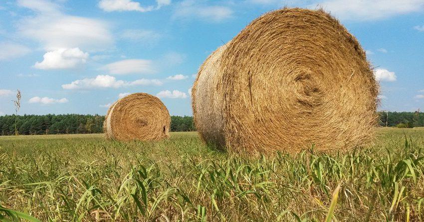 В Кыргызстане заготовлено почти 3.8 млн тонн корма