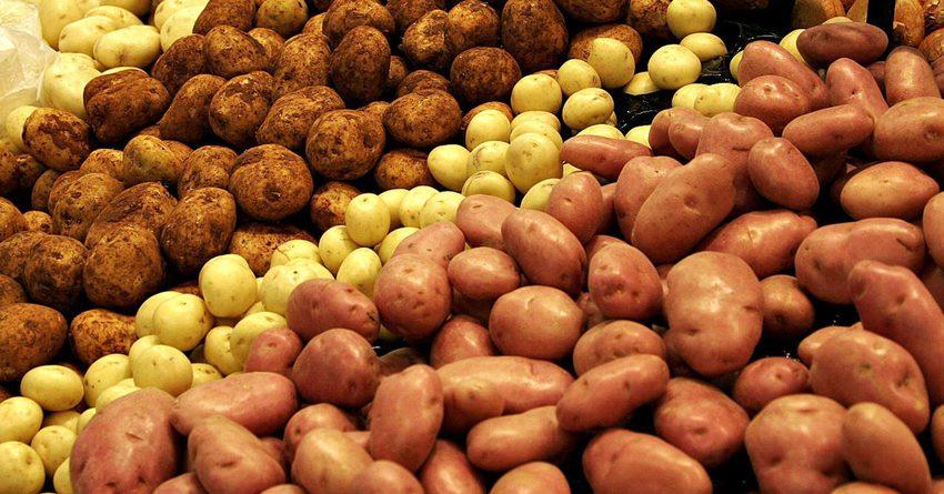 Производство картофеля сократилось на 4.8%