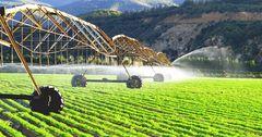 Странам ЕАЭС дали рекомендации по господдержке сельского хозяйства