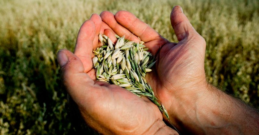 Доходы кыргызстанцев от ведения подсобных хозяйств упали на 15%
