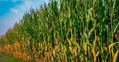Биотехнологии помогли увеличить урожайность в регионах КР