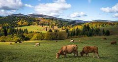Страны ЕАЭС будут обмениваться сведениями в области животноводства