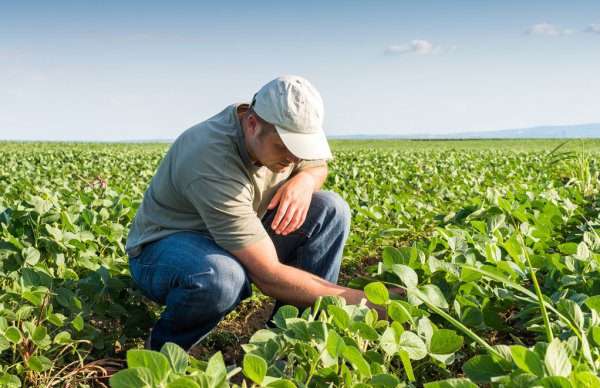 Фермерам КР предоставят кредиты на выгодных условиях