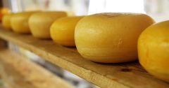 Сыроваренную компанию «Сут Булак» выкупил швейцарский инвестор
