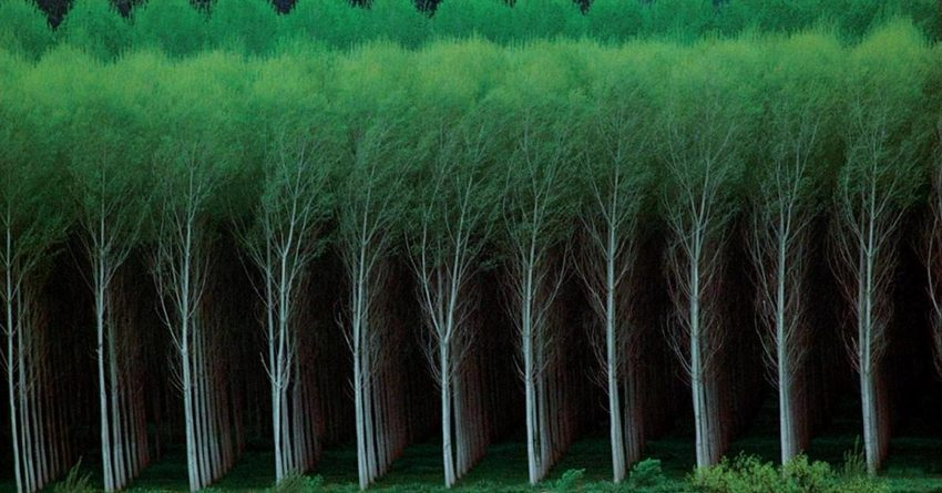 Гослесхоз собирается взять кредит в $6,6 млн у МАР и МБРР на посадку деревьев