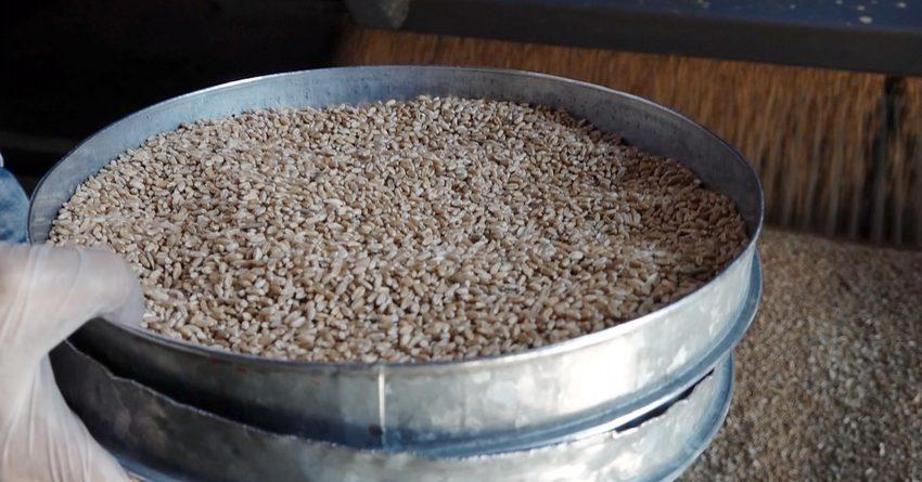 В Кыргызстан доставлена пшеница, приобретенная в России