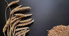 «Кумтор» выделил грант на покупку семян Джети-Огузскому району