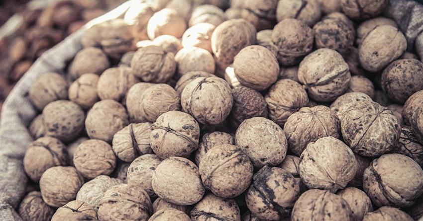 Россия вернула в Кыргызстан орехи