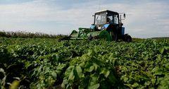 Сельское хозяйство ЕАЭС выросло всего на 0.5% за год