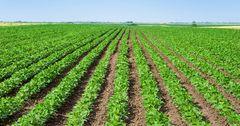 Китайский холдинг вложит 10 млрд рублей в российское сельское хозяйство