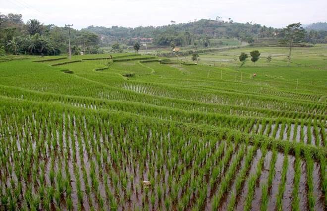 Странам Азии рекомендовано преобразовать сельское хозяйство