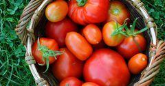 Компания Tomatkg поставила в Узбекистан продукции на $1 млн