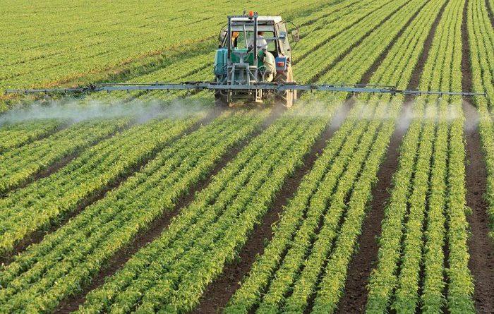 В КР выдали 314 кредитов для развития пищевой отрасли
