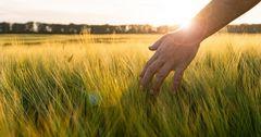 РКФР проспонсировал сельское хозяйство на $160 тысяч