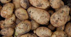 С начала года картофель в КР подорожал на 30.7%