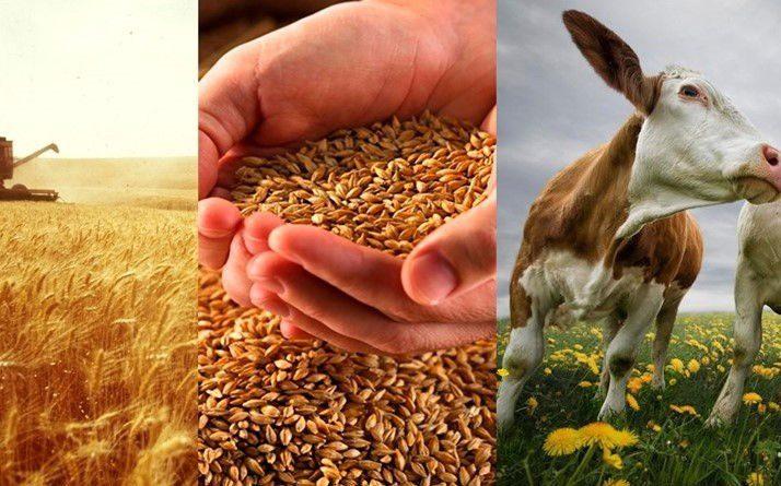 Фермеры взяли в займы у государства более 1.6 млрд сомов по проекту ФСХ-9