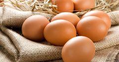 Во всех странах ЕАЭС отмечен спад производства яиц
