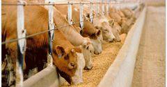 66% всех кредитов по ФСХ-8 выдано на животноводство