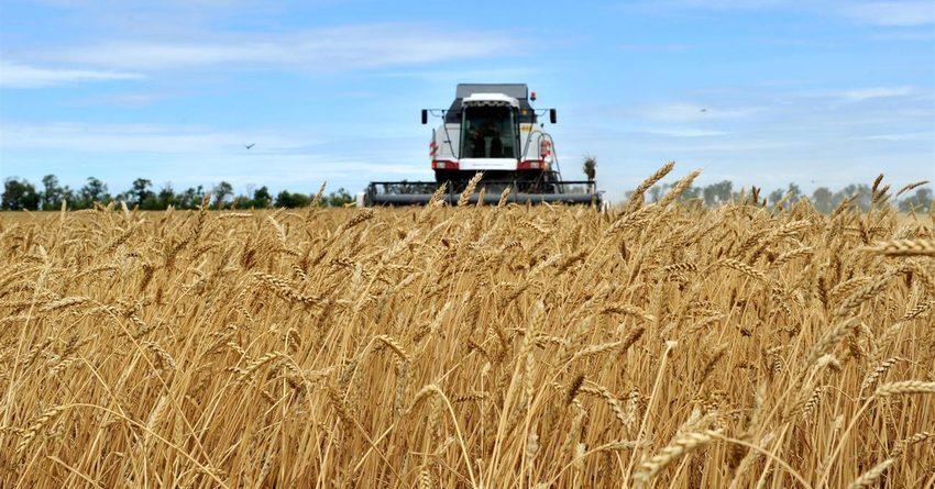 В 2018 году посевная площадь сельхозкультур увеличилась на 8.3 тысячига