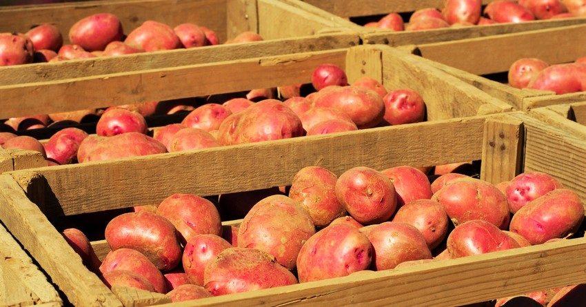 РКФР выдаст кредит Кыргызцентрпродукту для увеличения экспорта сельхозпродукции