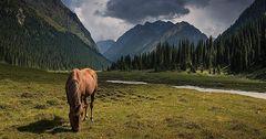 Каждый турист в 2018 году потратил в Кыргызстане почти по $329