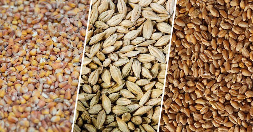 В исламских государствах будет создан Зерновой фонд