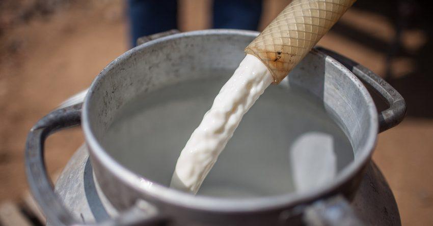 Из гранта МАР на развитие молочного сектора КР на консультанта потратят 4.8 млн сомов