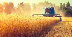 В КР удельный вес сельского хозяйства в структуре ВВП составляет 12.1%.