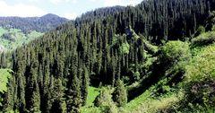 Всемирный банк и GEF выделили более $1 млн на леса Кыргызстана