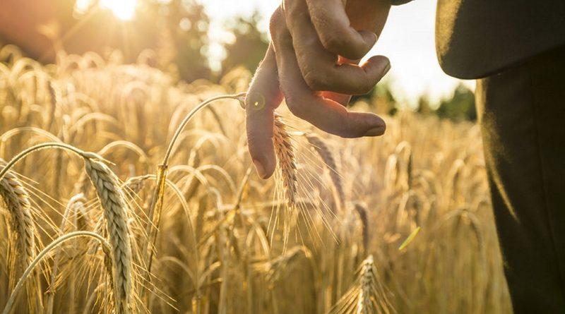 В посольствах КР внедрят должность атташе по сельхозвопросам за рубежом