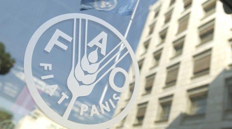 Мировые цены на продовольствие в марте резко снизились — ФАО ООН