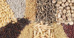 Ошская область на 100% обеспечена семенами — Минсельхоз