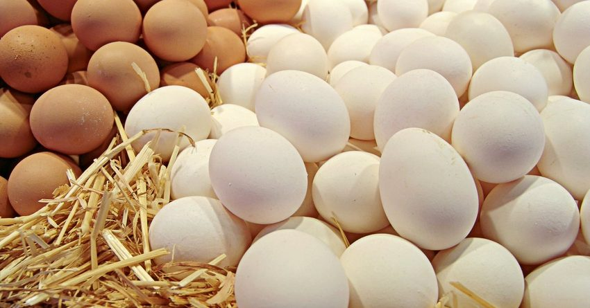 В Кыргызстане за три месяца произведено 169.7 млн куриных яиц