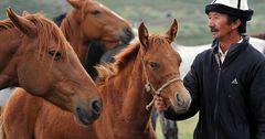 В КР чаще остальных льготные кредиты брали животноводы